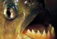 3fische