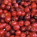Acerola – Kirsche der Antillen