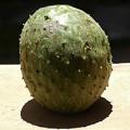 Araticum – Grafen-Frucht