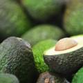 Abacate – Avocado