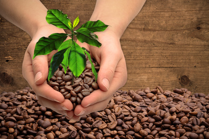 Hands with coffee tree and coffee beans