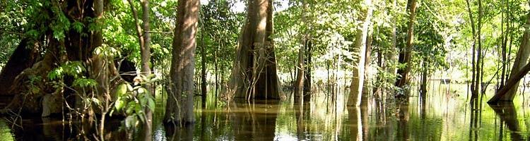 amazonien-teaser