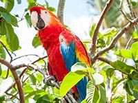 fauna-arara-vermelho_5191