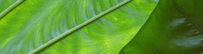 flora-fauna-blattstruktur_0099
