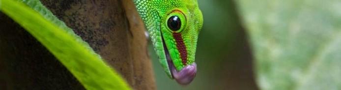 flora-fauna-gecko