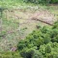 Amazonien 5 vor 12