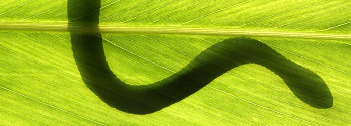 snake on leaf in backlight condition