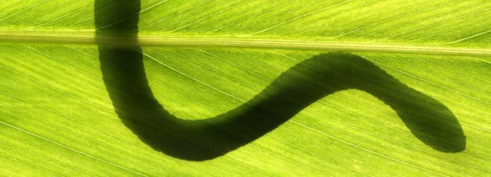 snake on leaf in backlight condition
