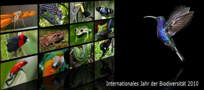 Regenwald-Dias mit Kolibri