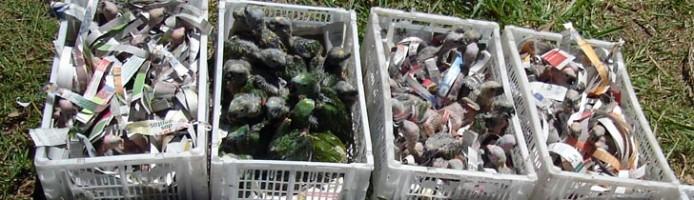 tierhandel1_beschlagnahmte_papagei