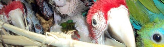 tierhandel3_papagei_gerettet