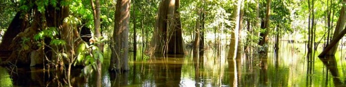 regenwald-amazoniens