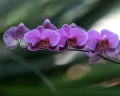 33orchideen-Fotolia_15100481_S