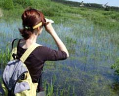 35birdwatching-pantanal-Fotolia_3411100_S