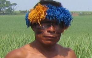 indio-news-biotreibstoff