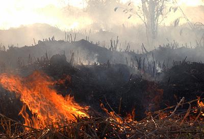 amazonien brennt