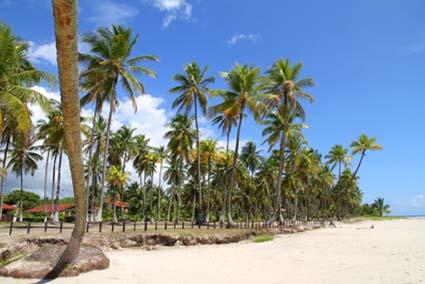 Beachfront in Bahia