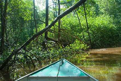 mangroven boot_DSC4558