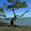 Insel Distrikt Itaparica