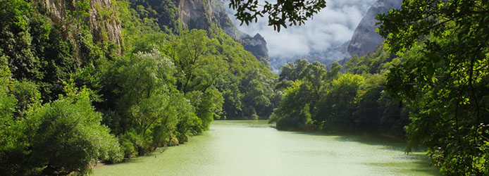 Deep jungle, Amazonia