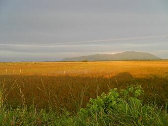 Graslandschaft in der Savanne Roraimas