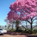 © gopantanal.com