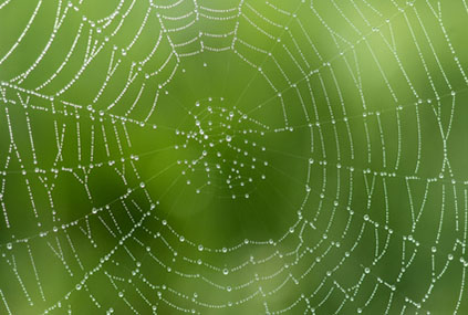 Spinnwebe im Gegenlicht