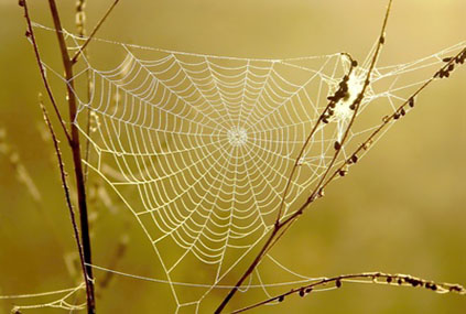 Spider web on a meadow in the rays of the rising sun