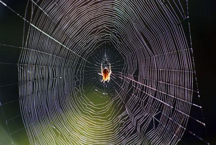 spider´s web
