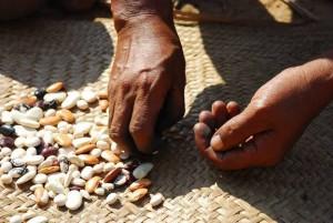 sementes-indios