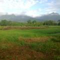 Landwirtschaft, Wiederaufforstung