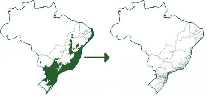 mata-atlantica-entwicklung
