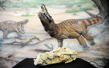 museu_ciências_urca_0108