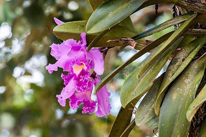 pflanze serra do japi