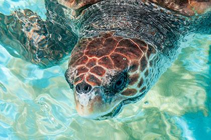 8fauna-projekt-tamar-schildkröten_4232