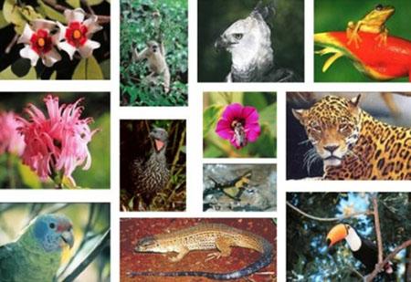 biodiversidade71284