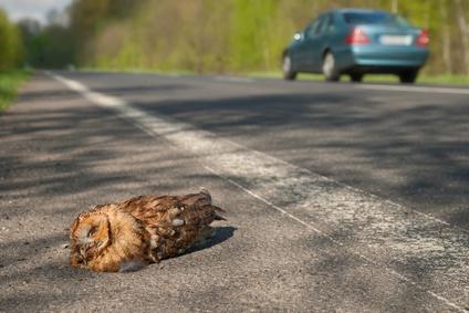 dead browl owl