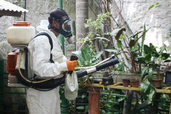dengue-brasil