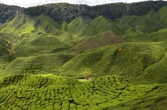 Malaysia besitzt einen der ältesten Regenwälder der Welt; Pixabay.com © E3L5 (CC0 1.0)
