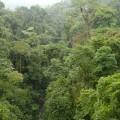 Brasilien ehrt heute Mittwoch den bedrohtesten Urwald der Erde, den Atlantischen Regenwald