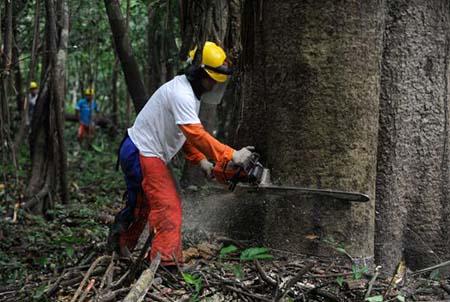 Tomaz Silva-AgenciaBrasil-Abholzung