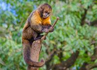 Monkey and stick