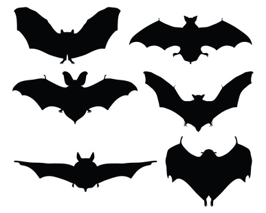 Black silhouettes of bats on a white background, vector
