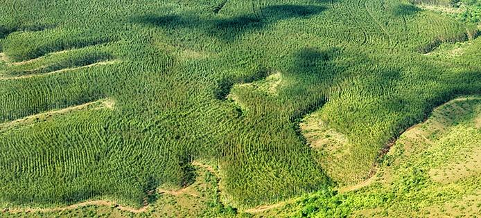 Holzschlag Amazonas_Luciana Macedo Fotos Publicos
