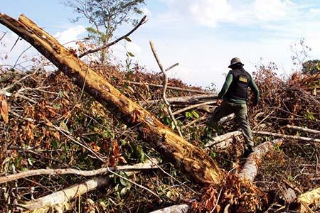 Amazonas Abholzung_Hebert Rondon Ibama