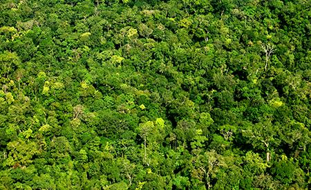 Amazonaswald_Luciana Macedo Fotos Publicas