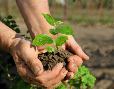 Hands holding a young sapling, caring for plants