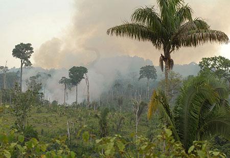 Regenwald-Feuer2_AgenciaBrasil