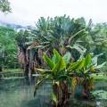 Botanischer Garten Rio de Janeiro | Foto: sabiá brasilinfo