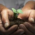 Rock in Rio bringt ein Projekt zur Pflanzung von einer Million Bäumen heraus